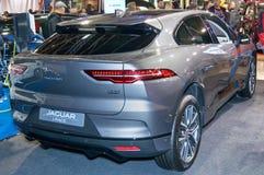 Jaguar-I-Tempo stock foto's