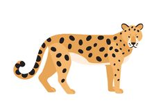 Jaguar isolated on white background. Stunning wild exotic carnivorous animal. Graceful large American wild cat or cute. Felid with spotted coat. Colorful vector stock illustration