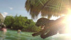Jaguar jumping off a beach palapa at a tropical resort. A jaguar jumps from a beach palapa into the refreshing ocean water stock video