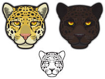 Jaguar or Leopard Faces. Illustration of jaguar and leopard faces in color and black and white Royalty Free Stock Image
