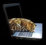 Jaguar lies on the laptop closeup. Jaguar lies on the laptop Royalty Free Stock Photography