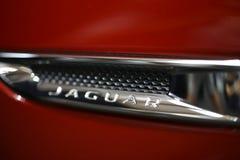Jaguar loga kruszcowy zbliżenie na Jaguar samochodzie zdjęcia stock