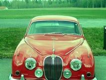 jaguar arkivfoto