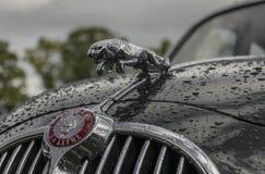 Jaguar-Mützenmaskottchen Stockbild