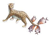 Jaguar och piranha Arkivbild