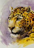 Jaguar. Portrait of Jaguar Panthera onca. Picture created with watercolors Stock Image