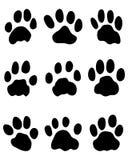 Jaguar's paw Stock Photos