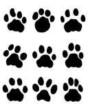 Jaguar's paw Royalty Free Stock Photo