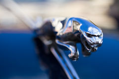 Jaguar - saut du chat Image stock