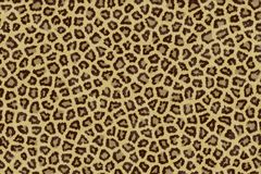 Jaguar skin Stock Photography