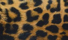 Jaguar skin Stock Images
