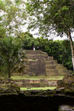 Jaguar Temple, Lamanai Belize Stock Photography