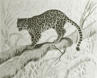 Jaguar on the tree. Hand drawing of jaguar in amazonian forest Stock Images