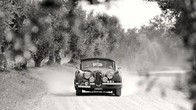 A Jaguar XK120 takes part to the GP Nuvolari classic car race on September 20, 2014 in Castelnuovo Berardenga (SI). The car was bu Stock Photography