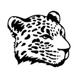 Jaguars head Royalty Free Stock Photo