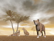 Jaguars in the savannah - 3D render. Jaguar herd with baby and umbrella acacias in the savannah - 3D render Royalty Free Stock Photo