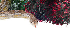 Jahr der Schlange Stockfoto