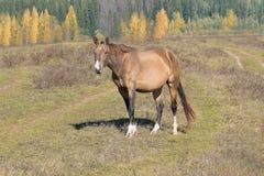 Jahr des Pferds 2014 Stockbilder