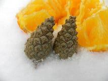 Jahr neben orange Schnee- und Eisbaumsamen Lizenzfreie Stockfotos