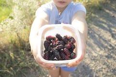 5 Jahre alte kleine Mädchen, welche die Ernte der schwarzen Maulbeere zeigen Lizenzfreie Stockfotografie