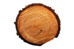 Jahresring des Baums (Stempelschneiden) Stockfotos