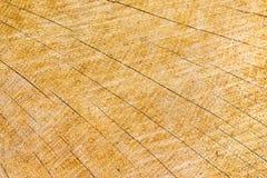 Jahresringe auf einem Bauholzklotz, mit Sprüngen in einem Solarmuster Stockfotos