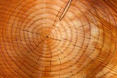 Jahresringe auf einem Baumkabel Stockbilder