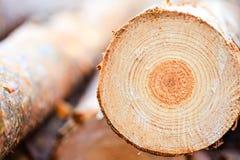 Jahresringe auf gesägtem Kieferbauholzholz Stockfotos