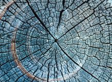 Jahresringe des alten Holzes Stockfotografie