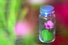 Jahrestagskarte mit Blume und Herzen formte Blatt im Glas Stockfoto