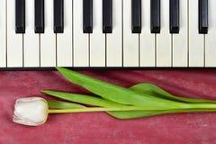 Jahrestagskarte mit Tulpe und Klaviertastatur Lizenzfreie Stockfotos
