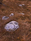 Jahreszeitänderung im Berg Stockbild