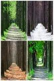 Jahreszeit stockbilder