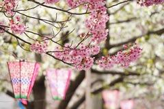 Jahreszeit der Kirschblüten im Frühjahr von Japan stockbilder