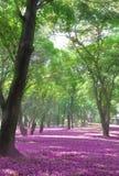 Jahreszeit des Parks im Frühjahr bunt lizenzfreie stockfotografie