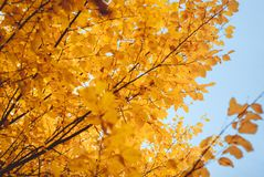 Jahreszeit des schönen Herbstlaubs Lizenzfreie Stockbilder