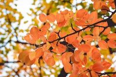 Jahreszeit des schönen Herbstlaubs Lizenzfreie Stockfotos