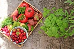 Jahreszeit Gemüse und fruts Lizenzfreie Stockbilder
