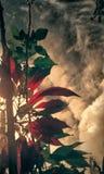 Jahreszeit-Rot-Blätter stockbild