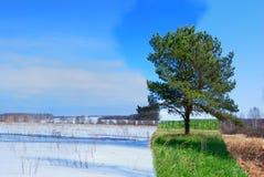 Jahreszeiten Stockfotos