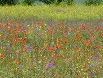 Jahreszeiten des Jahres Wilde Blumen in der Wiese lizenzfreies stockfoto