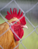 Jail bird Stock Photo