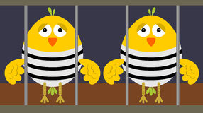 Jailed birds Royalty Free Stock Photos