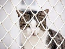 Jailed cat (7). A cat behind bars,  jailed Stock Photo