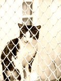 Jailed cat (3). A cat behind bars,  jailed Stock Photos