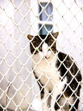 Jailed cat. A cat behind bars, jailed Stock Photography