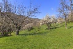 Jaillissez dans les montagnes près du village de Lahij Azerbaïdjan Photo libre de droits