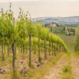 Jaillissez dans les vignobles toscans autour de San Gimignano, Italie Image stock