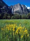 Jaillissez dans Yosemite Images libres de droits