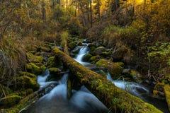 Jaillissez en montagne sauvage Altai, Russie de forêt d'automne Photographie stock libre de droits